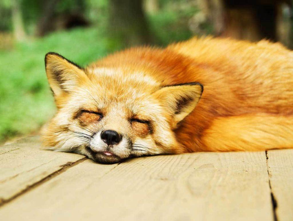 Ausreichender Schlaf ist wichtig wenn du Sport am Morgen machen möchtest