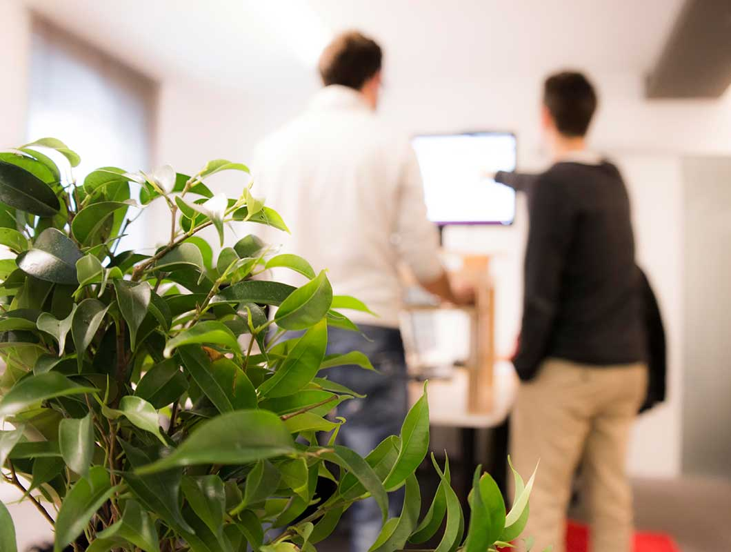 luftreinigende pflanzen f rs b ro die top 9 f r besseres raumklima. Black Bedroom Furniture Sets. Home Design Ideas
