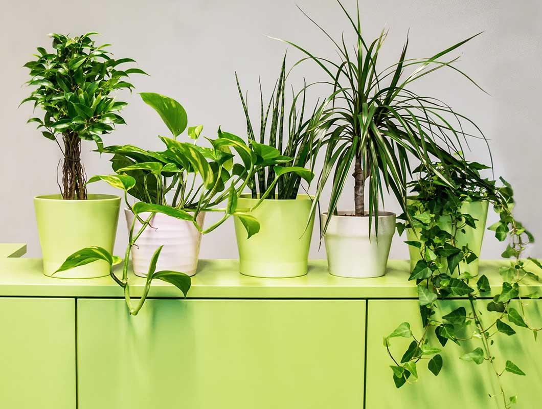 Luftreinigende pflanzen f rs b ro die top 9 f r besseres for Wohnzimmer mit pflanzen