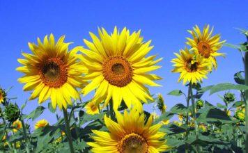 Vitamin D Sonne