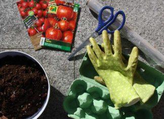 tomaten selber ziehen eierkarton gewächshaus