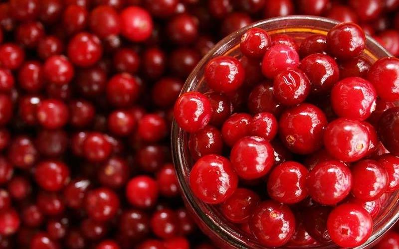 cranberry hausmittel gegen blasenentzündung