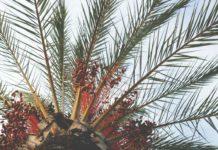 Palmöl ungesund
