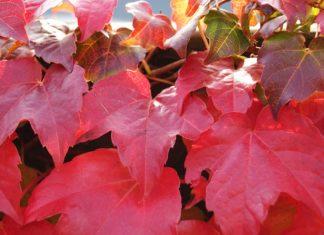 Bunte Herbstblaetter im September
